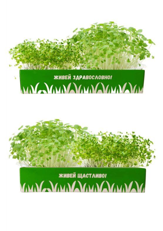 микро растения за дома
